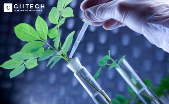 6m Investment in Israeli Agricultural Cannabis Research