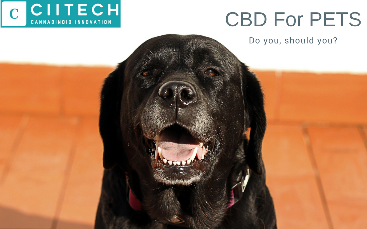 Is it safe to give CBD to pets?
