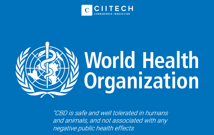 World Health Organization follows UK precedent that CBD is safe with no negative effects.