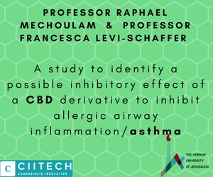 A study to identify a possible inhibitory effect of a CBD derivative to inhibit allergic airway inflammation asthma