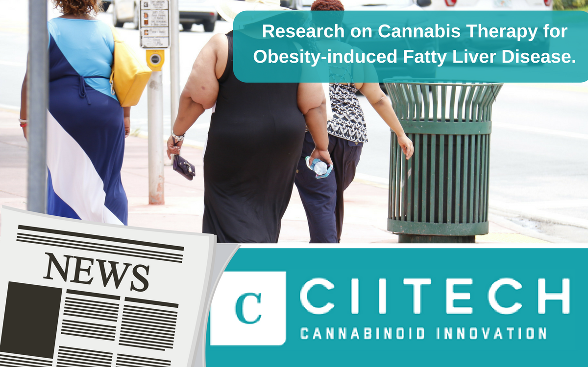 CiiTECH Sponsors Research on CBD Cannabis Therapy for Obesity-induced Fatty Liver Disease at the Hebrew University of Jerusalem, Israel
