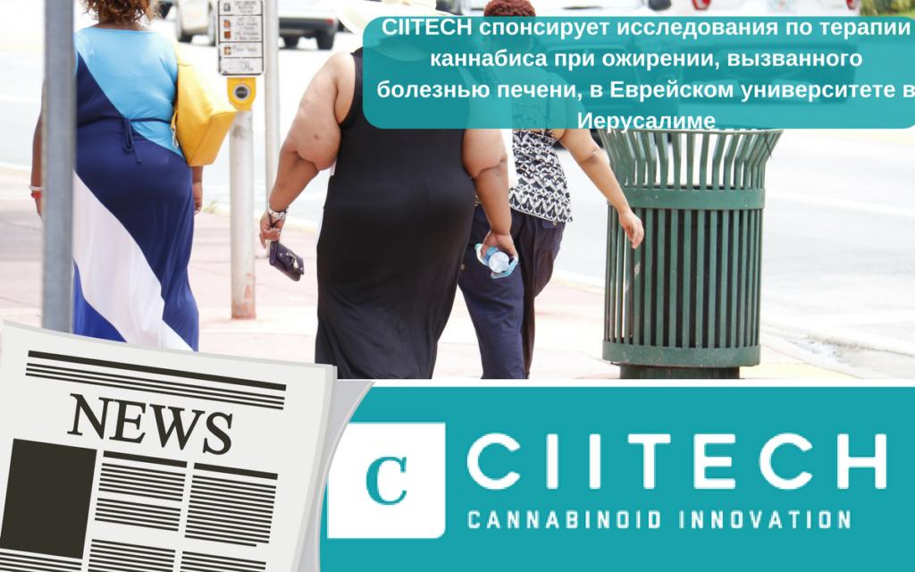 CIITECH спонсирует исследования по терапии каннабиса при ожирении, вызванного болезнью печени, в Еврейском университете в Иерусалиме