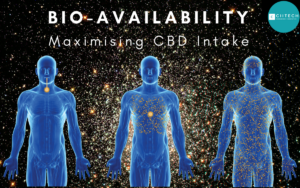 CIITECH_bioavailability CBD hemp