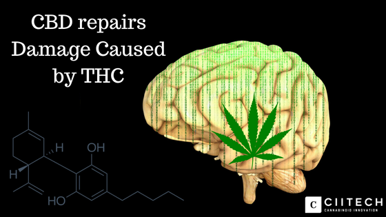 Proof that CBD fixes what THC Damages