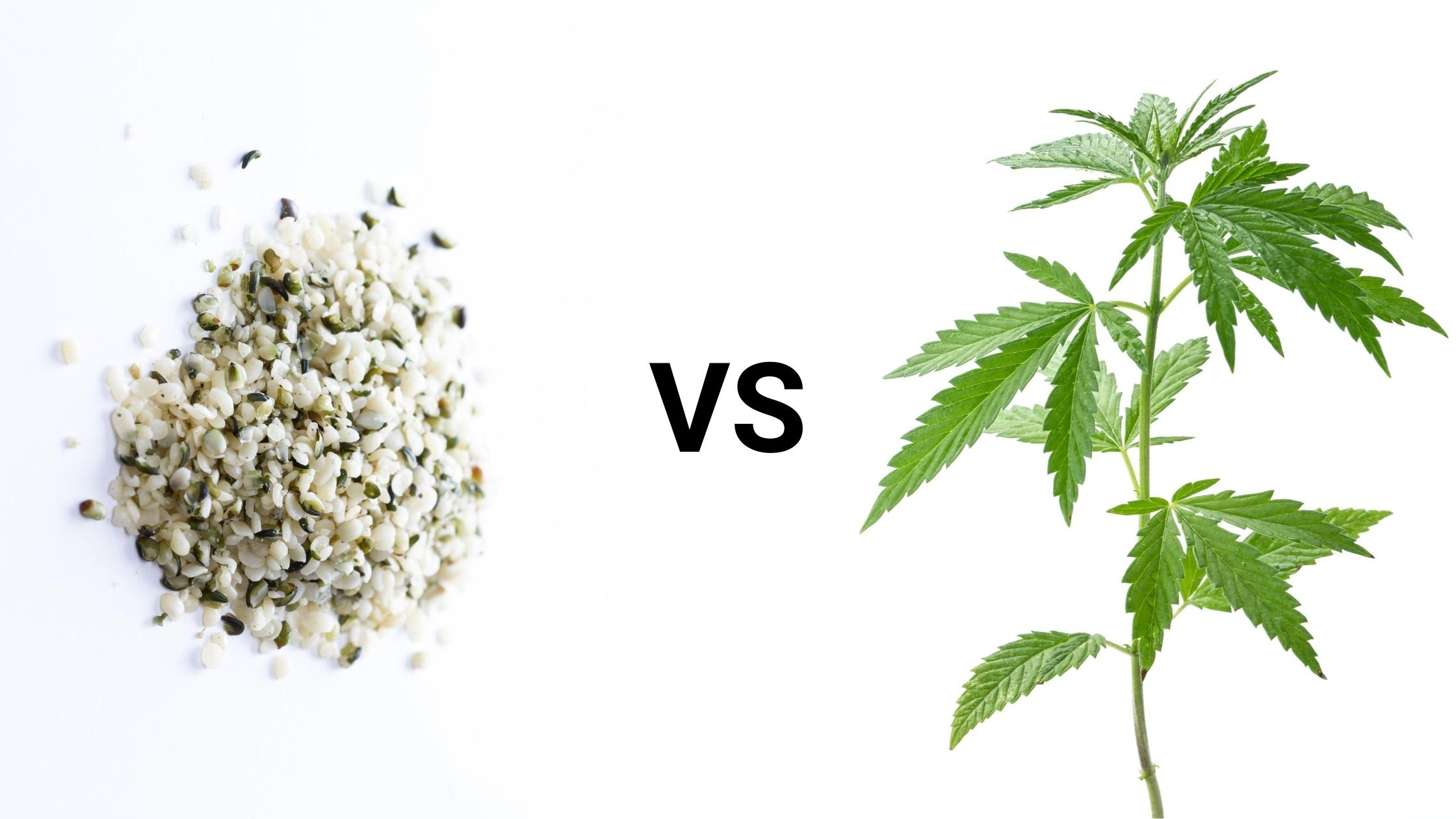 The difference between CBD oil and Hempseed Oil