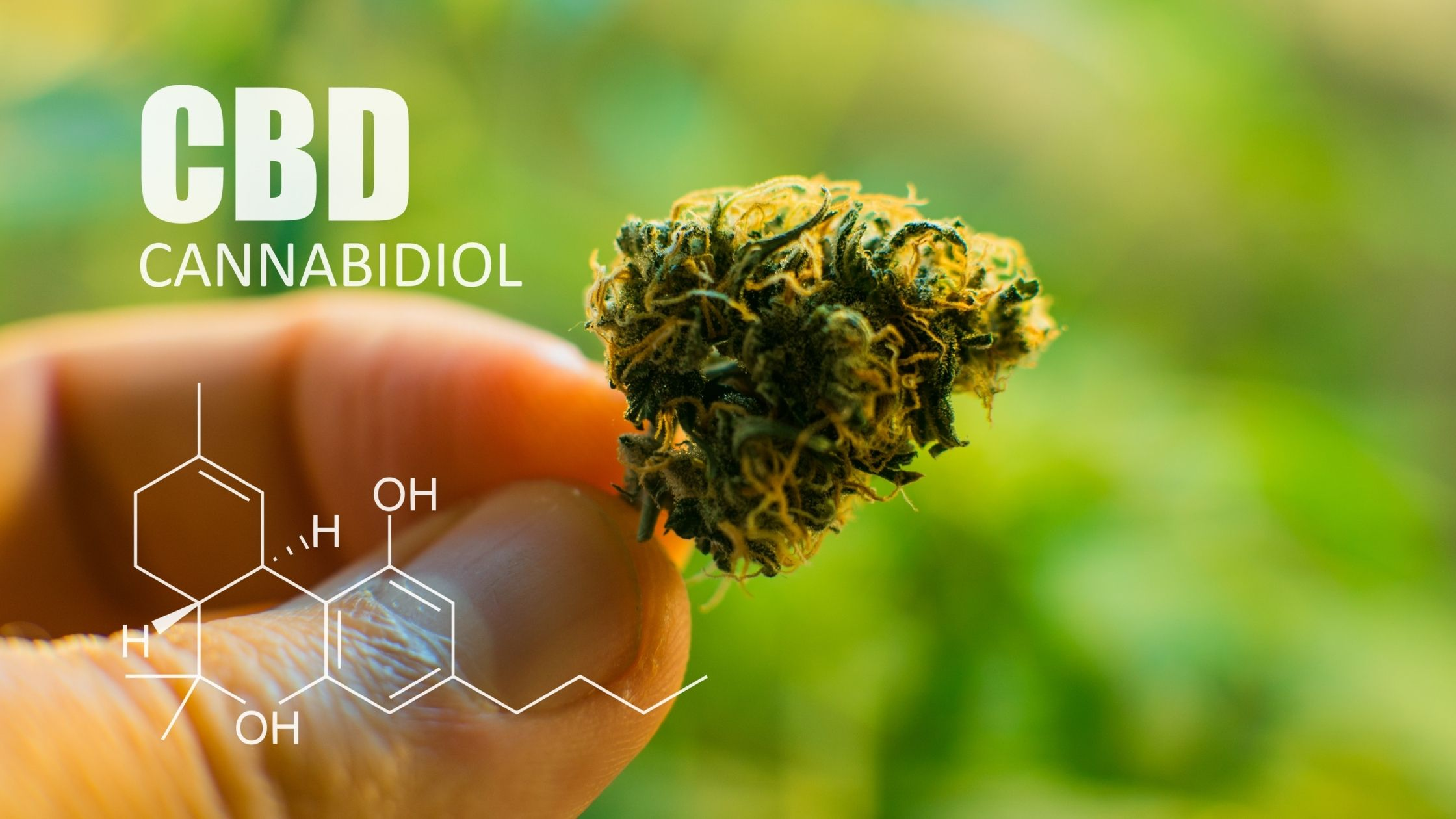 10 facts about CBD that you didn't know