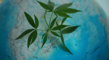 global cannabis legalisation